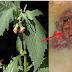 Kurang 16 Jam,Tumbuhan Ini Mampu Hapuskan Sel Kanser Payudara