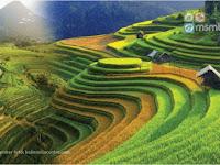 Kearifan  lokal Subak Sebagai sistem irigasi Tradiional  Bali yang sudah di akui Dunia #1