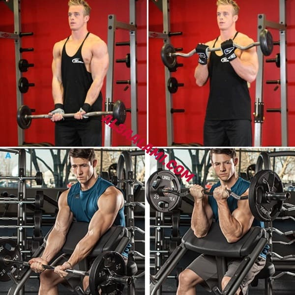 """تشريح عضلة البايسِبس, نفس العضلة """"و التي تُسمى أيضا بِالعضلة ذات الرّأسَين"""" بِقسمَيها : """"الرأس القصيرة لِلبايسِبس و الرّأس الطويلة لِلبايسِبس""""، بِالإضافة إلى """"عَضلة السّاعد"""" بِقِسمَيها : العضلة..."""