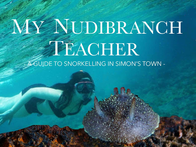 Title Image: My Nudibranch selfie: A guide to Snorkelling in Simon's Town