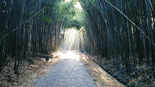Bambuzal e uma Mata parcialmente aberta  Jardim da UC