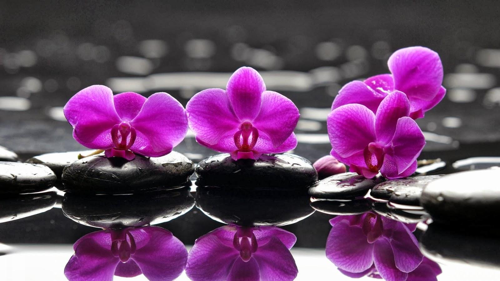 Fondo de pantalla flores violetas