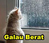 Kucing Saja Bisa Galau dan Patah Hati Serta Sakit Hati Apalagi Kamu