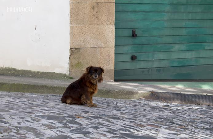 rincones galicia fotografía perro