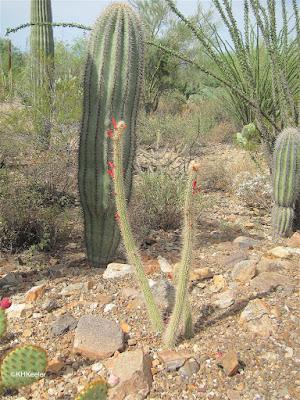 Lower Sonoran Desert, Arizona