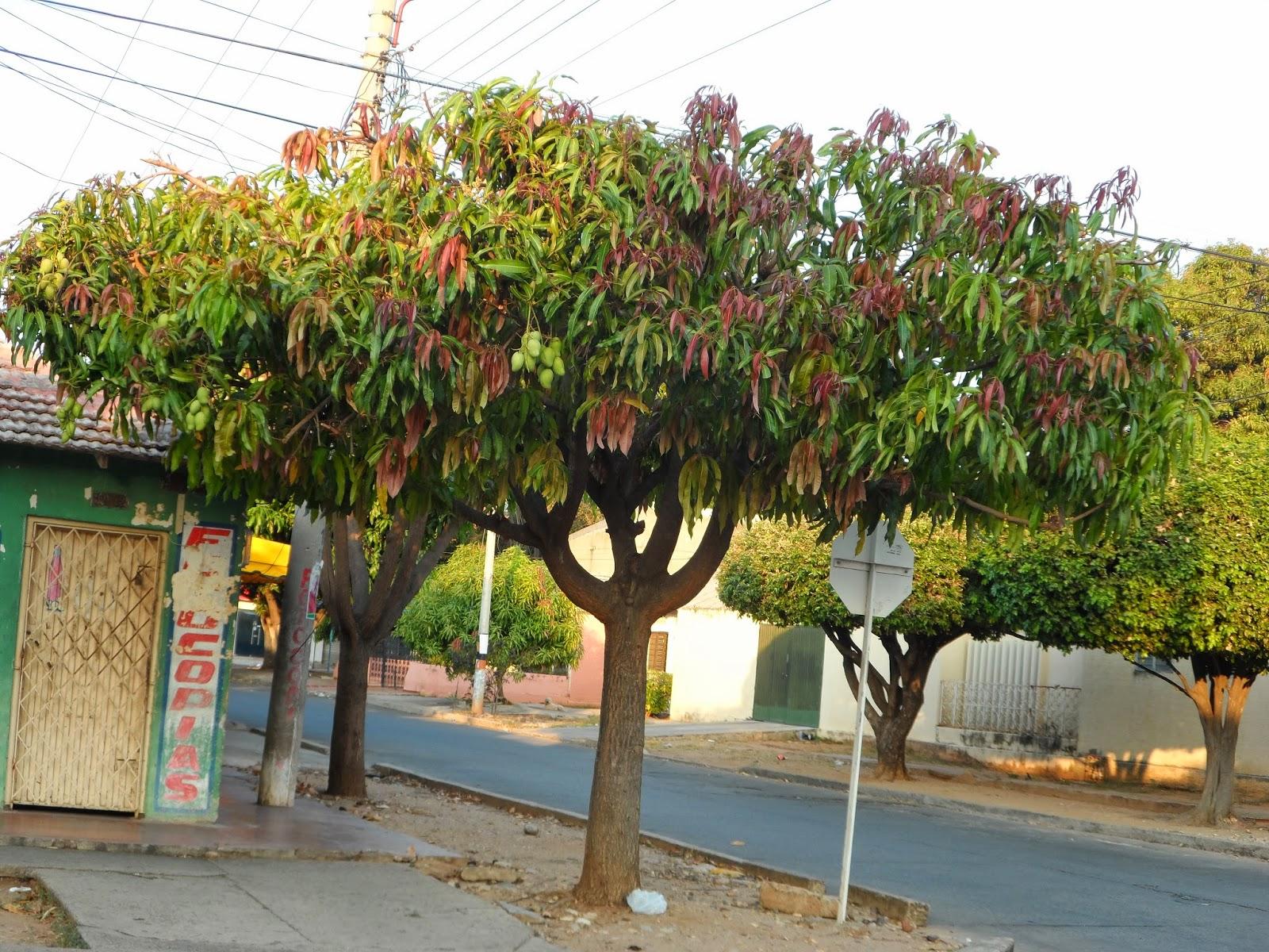 Imagenes Animadas De Arboles De Mango