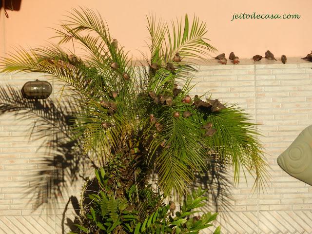 palmeira-lotada-de-passarinhos