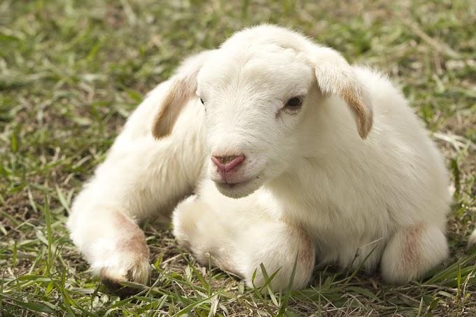 ¿Existen las fake news en torno a las granjas y mataderos?