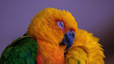 Colorful parrot, bird, free HD wallpaper