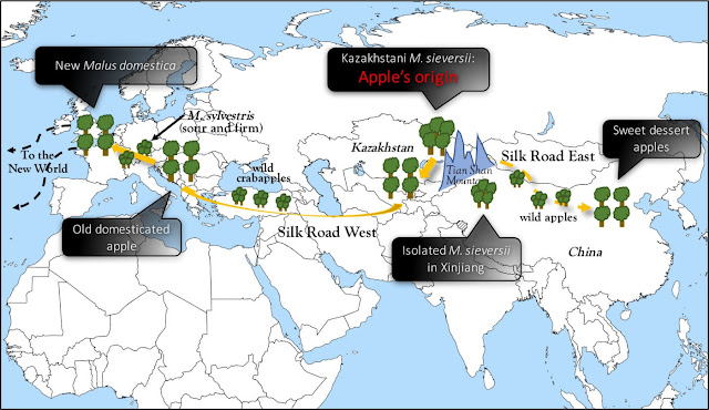 New genomic insights reveal a surprising two-way journey for apple on the Silk Road
