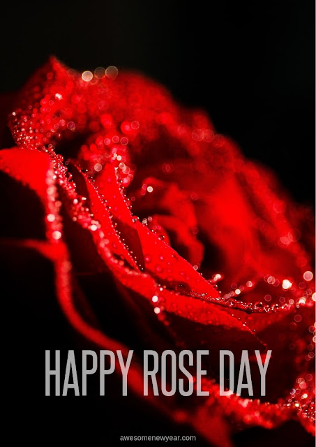 Happy Rose Day Images Photos Pictures & Wallpaper HD