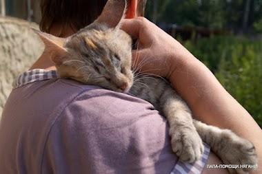 Кошка Сэля. Пристраивается очень интересная кошечка!