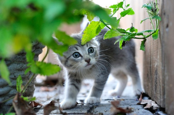 Bambus, grama verde e Erva-cidreira gato