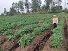 PT. Tanijoy dan PT .Graha Alam Sempurna hadir Berikan Solusi Permodalan dan Pemasaran Bagi Para Petani di Tapanuli Utara