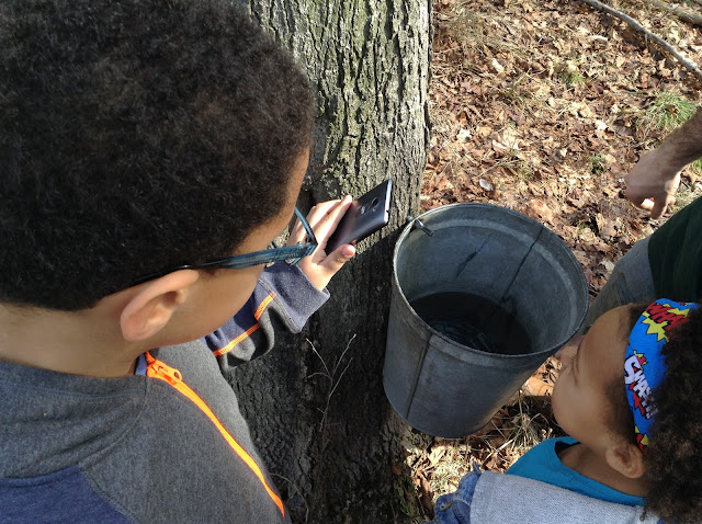 Lake Metroparks Lakepark #MapleSugarWeekends - maple syrup from the tap to the bottle