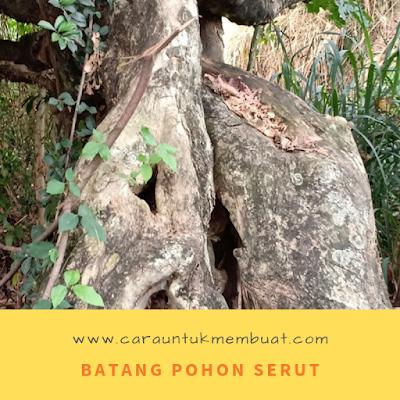 Batang Pohon Serut