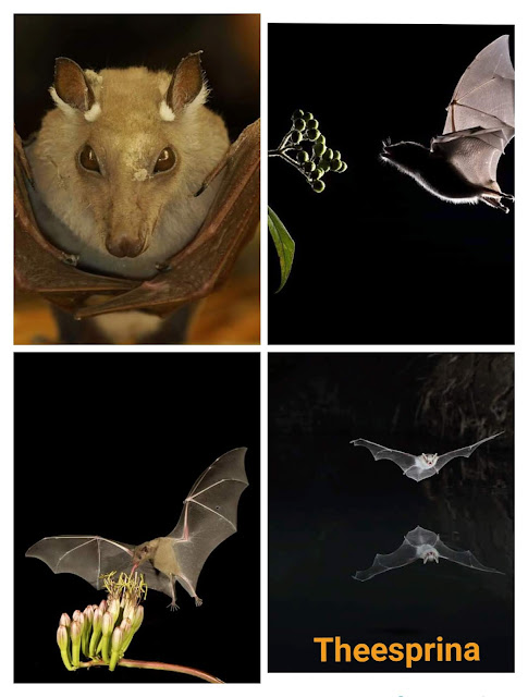 الخفافيش قد تكون ناقلة لفيروس كورونا الجديد فهل يجب قتلهم؟