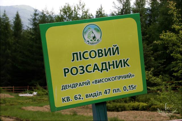 ogród dendrologiczny w Gorganach