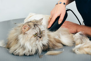jasa grooming kucing panggilan
