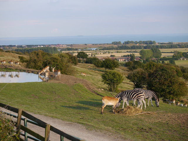 View from Port Lympne Giraffe Lodge glamping tent