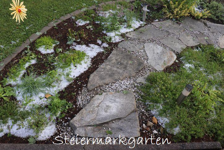 Hagelschaden-Kräutergarten-Steiermarkgarten