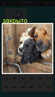 в закрытой двери дырка из которой выглядывают три головы собак 667 слов 5 уровень