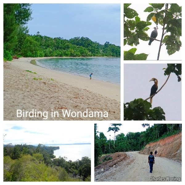 birding trip to wondama bay