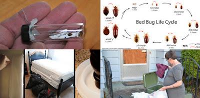 Bed Bugs Exterminator London Ontaro