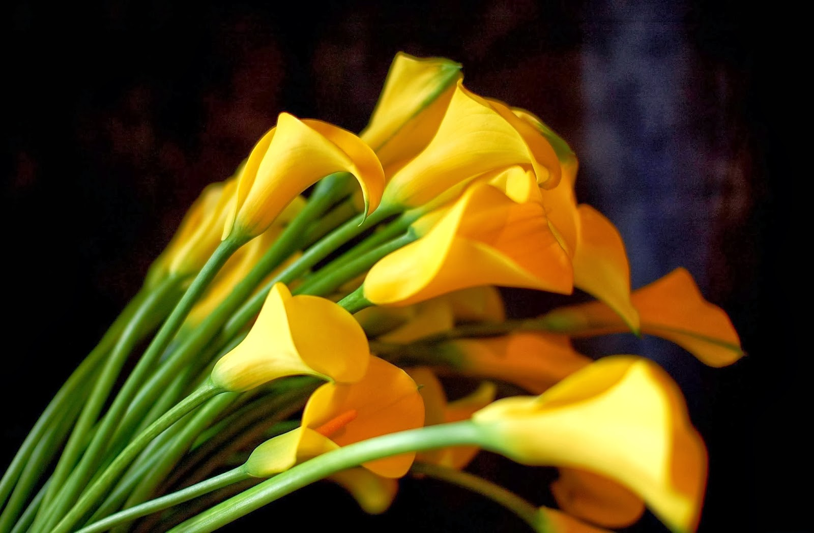 Beautiful flowers and their names types of flowers and their meaning yellow calla lily flowers 1600 x 1048 izmirmasajfo