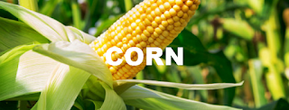 Futures trading: CORN (CME CBOT: ZC Futures) Trading Strategy Today, Target 485 (+24.23%)
