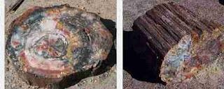 khasiat batu fosil kayu,jual fosil kayu,cara mengolah fosil kayu menjadi batu akik,mencari fosil kayu di semua pilihan,fosil kayu sungkai,khasiat fosil kayu sungkai,khasiat batu sepah kayu,