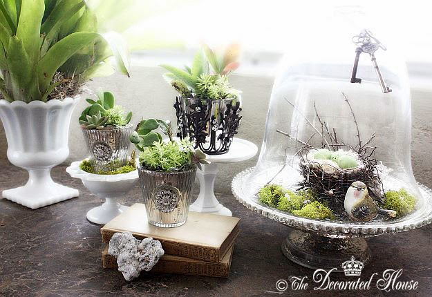 Decorating with Succulents & Sliver at The Decorated House
