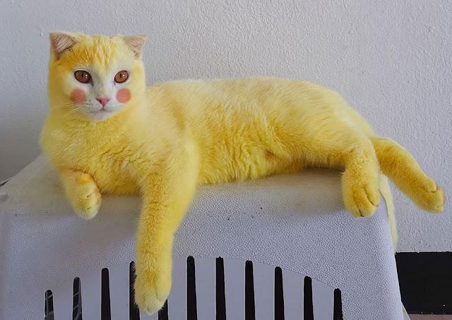 gambaran kucing imut