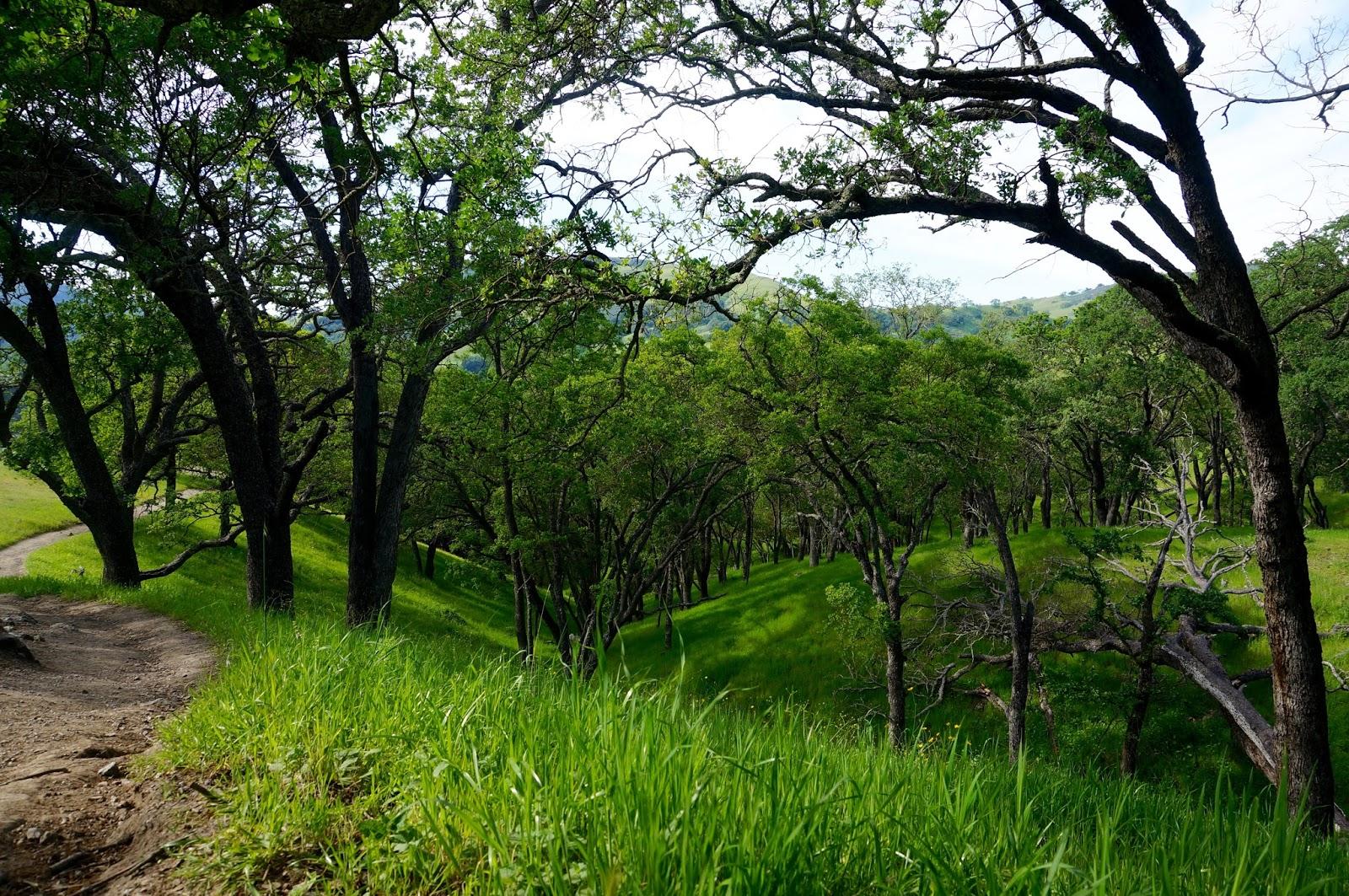 Sunol Regional Wilderness - www.greysuede.com