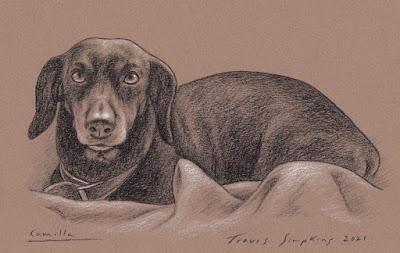 Camilla. Dog of Renzo Tartuferi. by Travis Simpkins