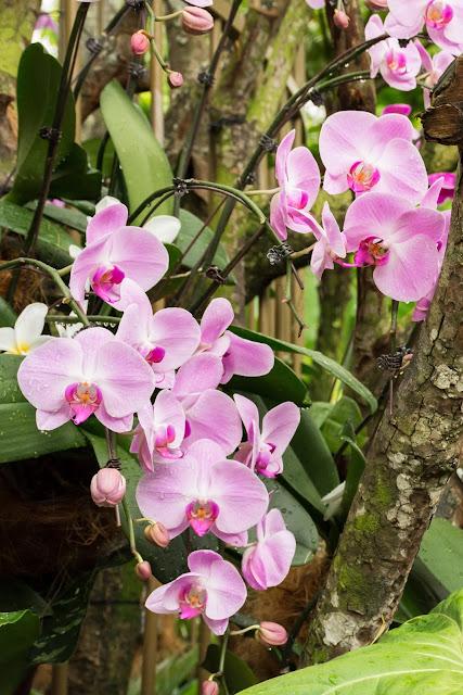 singapur, barvy, budovy, cestování, svět, botanická zahrada, flowers