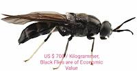 https://www.economicfinancialpoliticalandhealth.com/2019/06/us-700-kilogrammer-black-flies-are-of.html