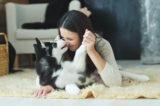 brincando com seu cão