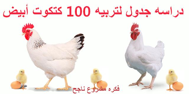 دراسه جدوى لتربية 100 فرخه بيضه 2021