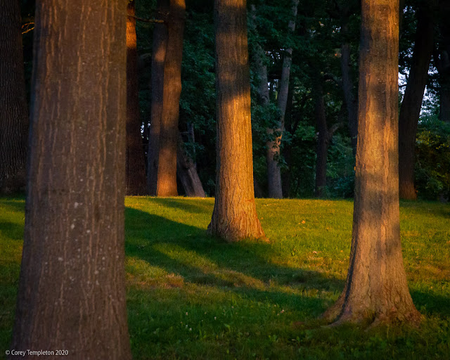 Portland, Maine USA July 2020 photo by Corey Templeton. Dramatic light on the trees at Deering Oaks Park this morning.