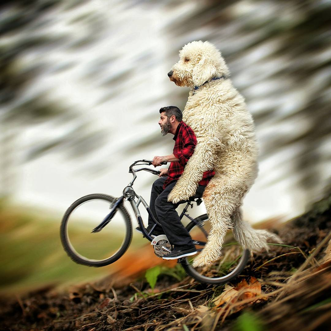 09-No-Brakes-Christopher-Cline-Juji-The-Giant-Dog-Photo-Manipulations-www-designstack-co