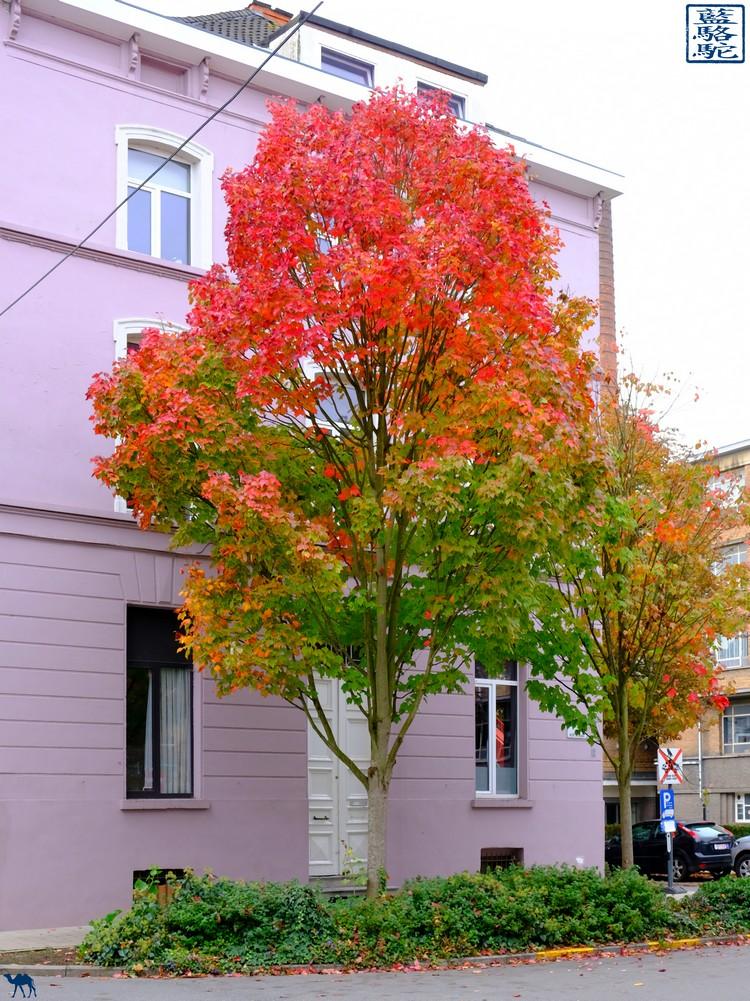 Le Chameau Bleu  - Blog Voyage Gand Belgique - L'automne à Ghent - Blegium - Week end en Automne à Gand