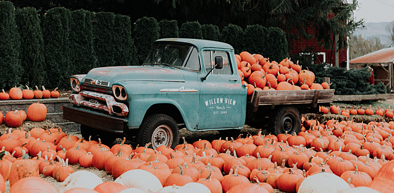 teal truck with pumpkins