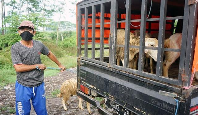 Pedagang hewan di Pasar Hewan Jogotrunan