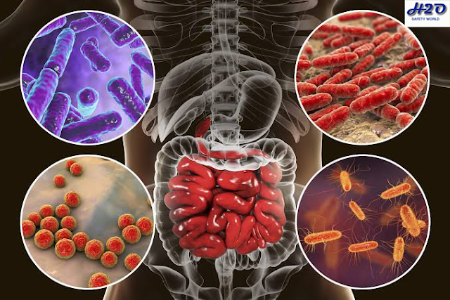 gut bacteria,gut flora,gut microbiome,gut,allergy,gut health,allergy prevention,gut flora organ,gut microbiota,allergies,microbiome,allergy (disease or medical condition),prevention,food allergies,preventing food allergies,peanut allergy,food allergy,probiotics,centers for disease control and prevention,vertical transmission of gut flora,food allergy causes,food allergy reaction,food allergy symptoms,food allergy awareness