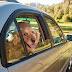 Concorda com que ter o cão com cabeça à janela do carro possa dar uma multa pesada?