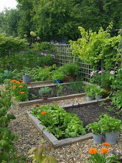 gardening ideas forbeginners Landscape