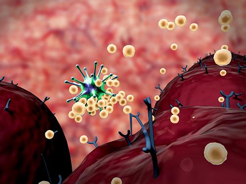 افضل 8 اطعمة تمكنك من تقوية جهاز المناعة ضد الفيروسات