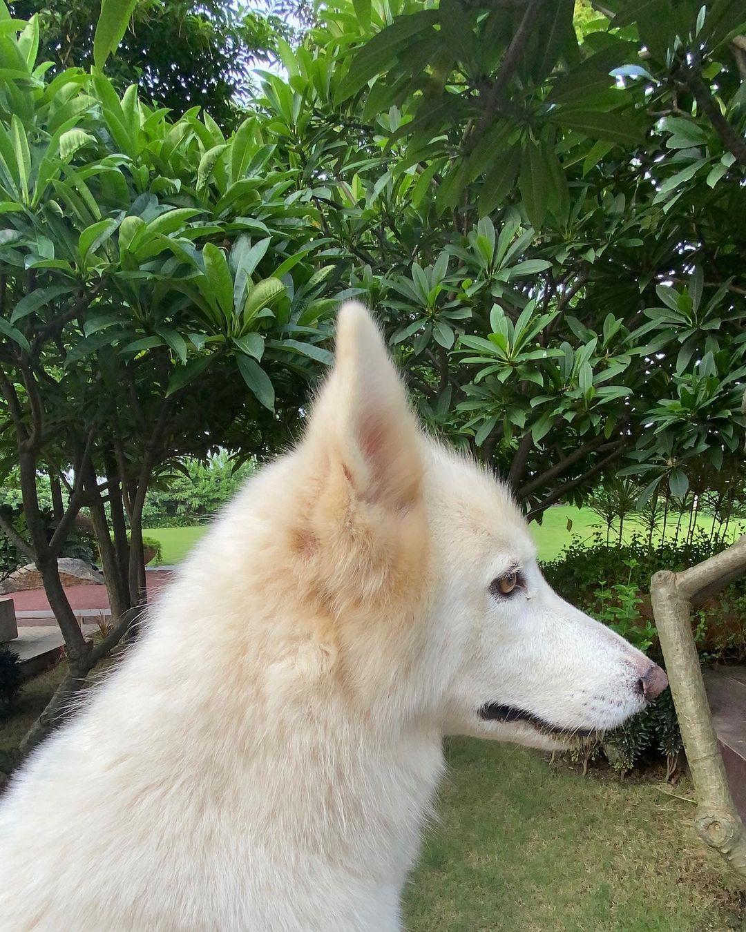 Sakshi Dhoni Wiki And Bio Net Worth | Sakshi Dhoni Age , Love Story , Height 2021