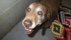 1/11/13 Is This Dog Still at The Gassing Shelter Beckley West Virginia?